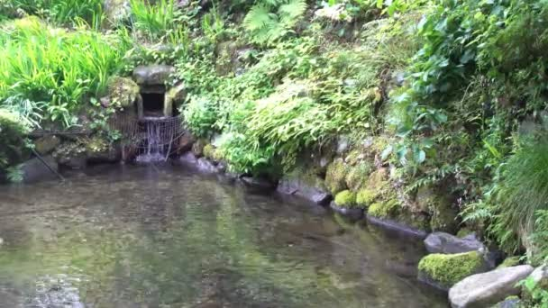 Japanese Botanical Zen Garden Red Green Leaves Water Melts Snow U2014 Stock  Video