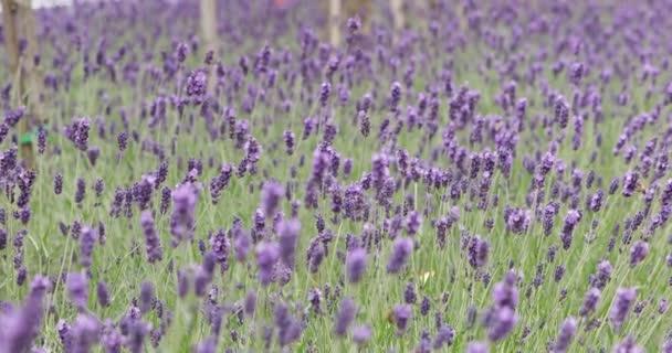 Květiny pohybující se ve větru za slunečného dne, zatímco hmyz se shromažďuje