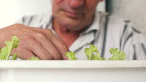 Close-up of hands of an elderly man caring for house plants. A pensioner processes seedlings. Selective focus, mans face out of focus