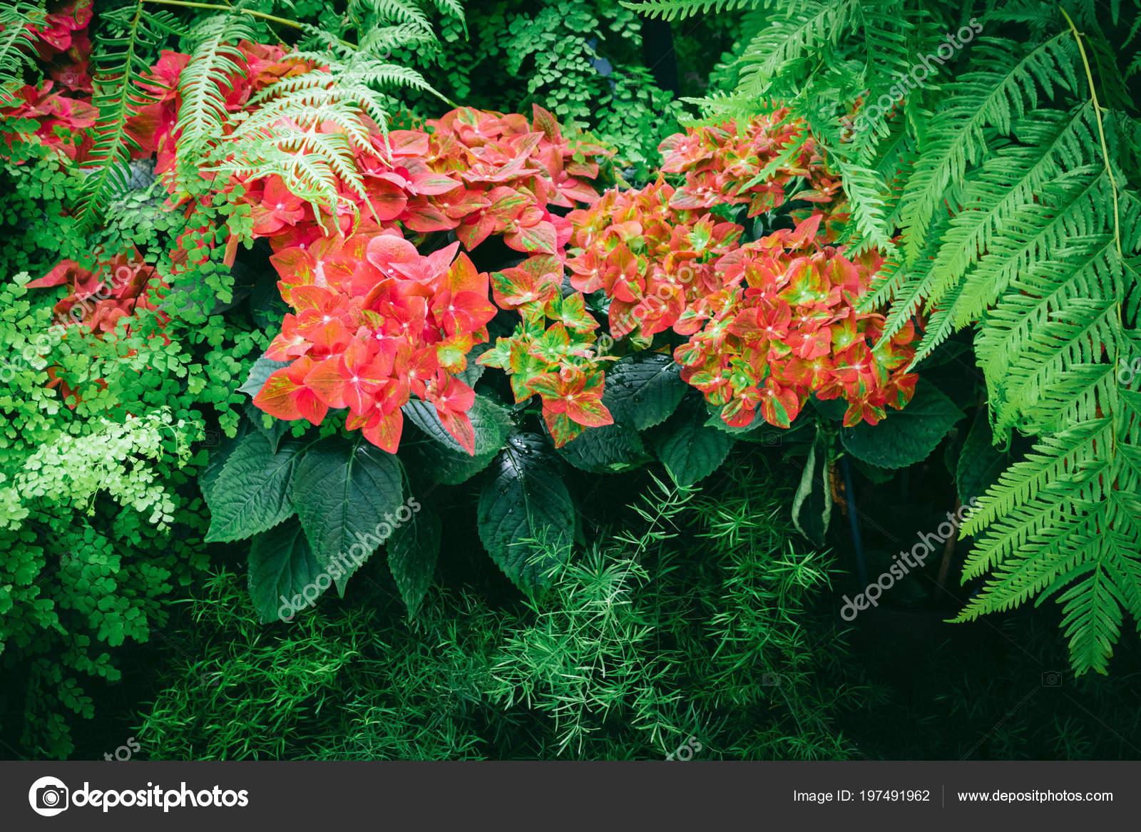 Kırmızı çiçek Açan çiçekler Güzel Halı Doku Duvar Kağıdı Veya Stok
