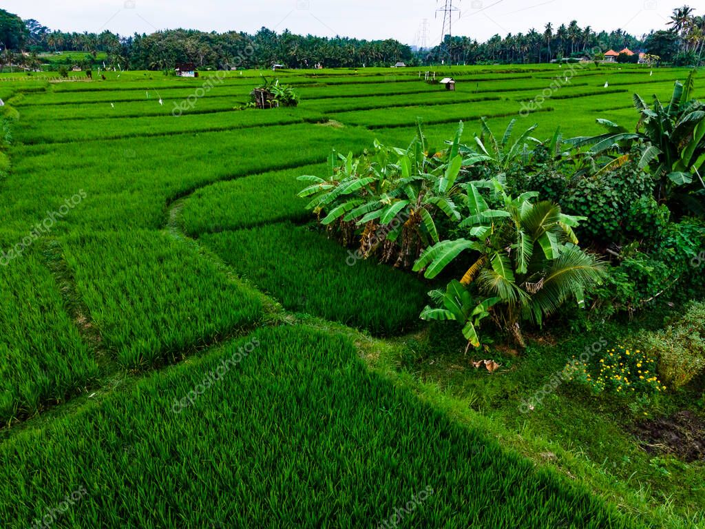 View from above of green rice fields of Tegallalang village, Ubud centre, Bali.