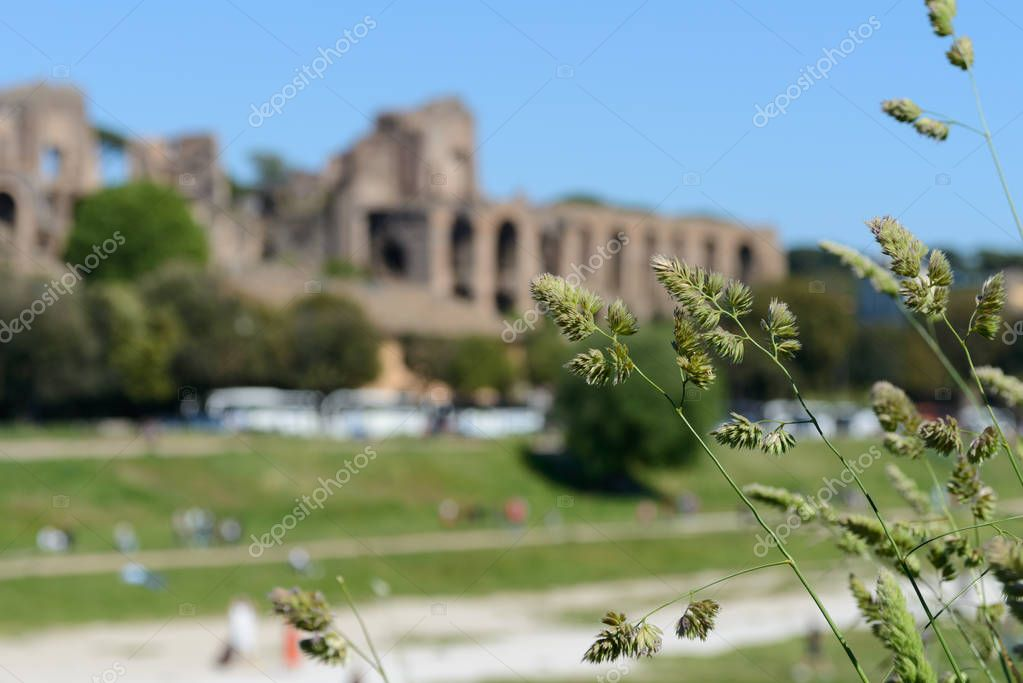 Nice green plants and defocused ruins in Rome