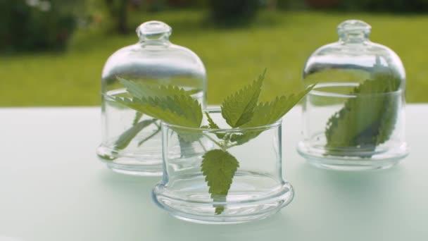 Nettle leaves in glass jars