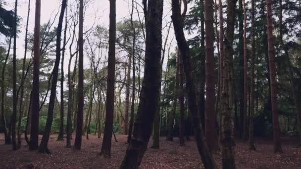 A békés pásztázás bal lövés egy sűrű erdő Észak-York megyében Angliában egy felhős tél napján
