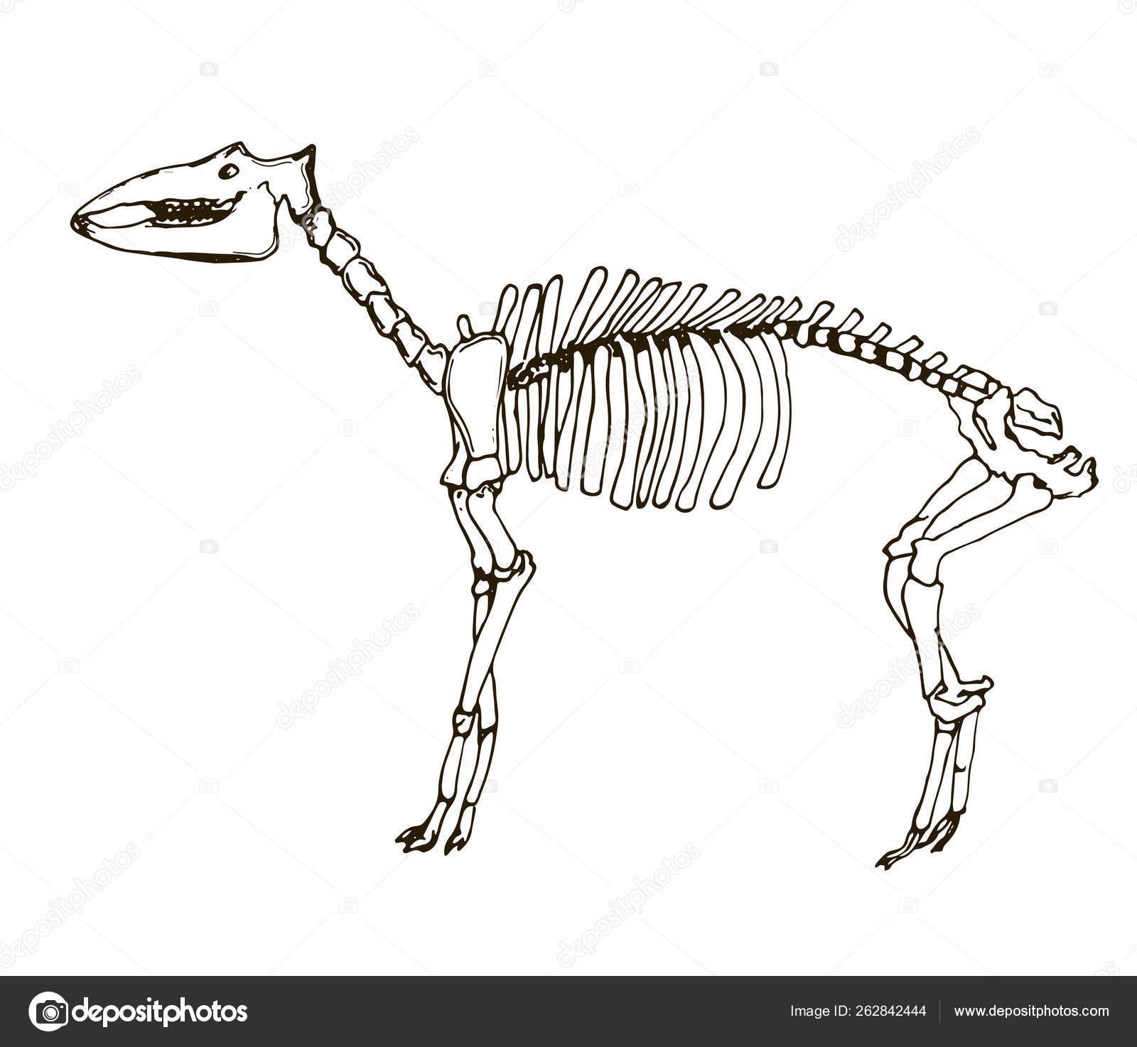 Skeleton Tattoo Designs Skeleton Art