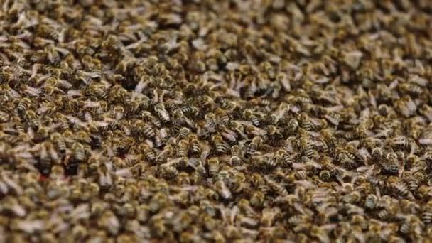 Nahaufnahme von Bienen auf Waben