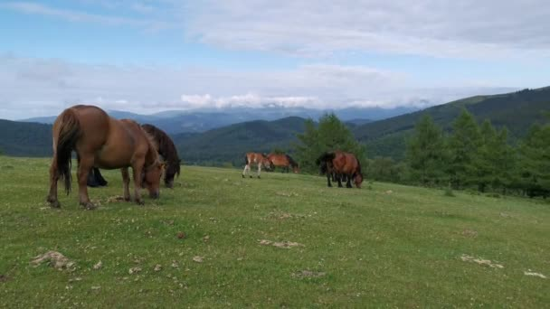 Horses grazing in the green meadows of Urkiola in Basque Country