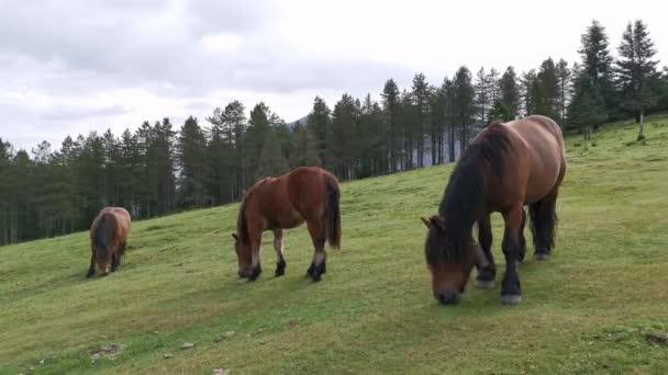 Ló legeltetés Urkiola zöld rétjein Baszkföldön