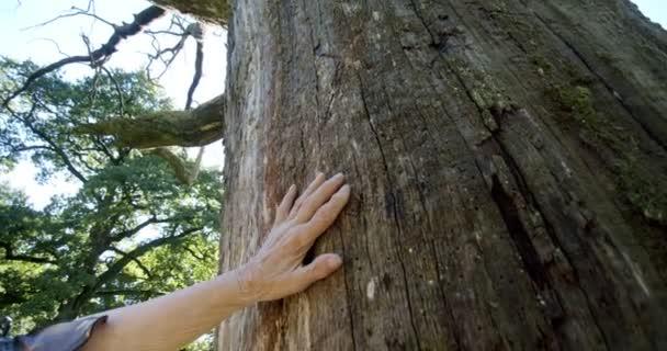 Nahaufnahme des Stammes eines Baumes, der die Hand eines älteren Mannes tastet