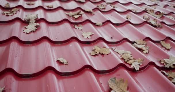 textura kachlová střecha s podzimními listy krásné podzimní pozadí