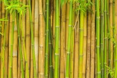 Fotografie bamboo tree wall for natural background