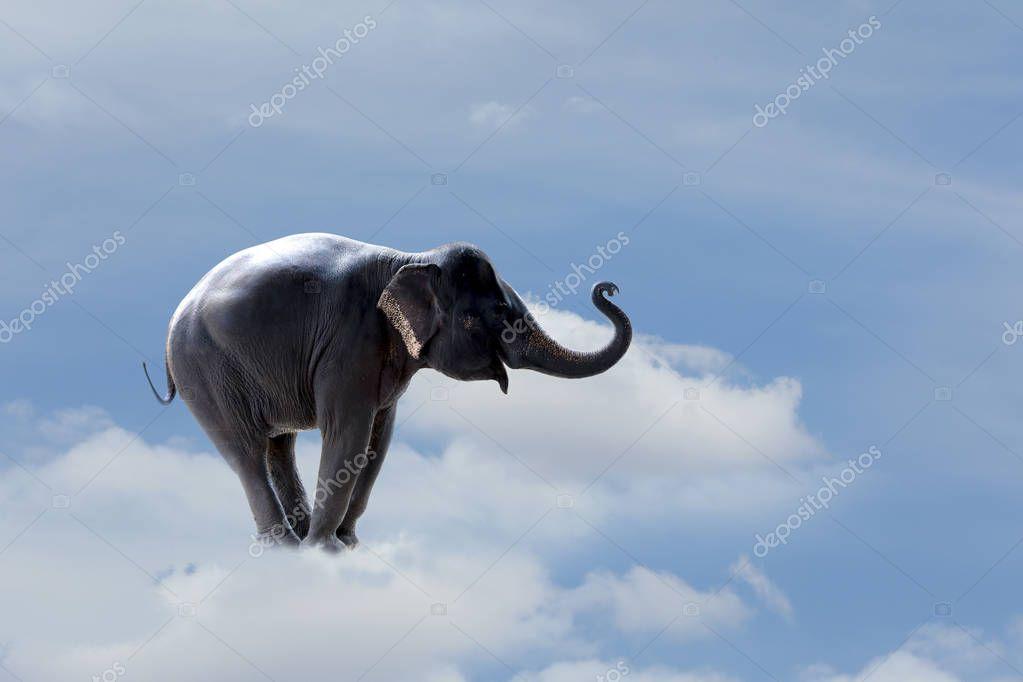 Start business success concept : Elephant walk cross over the clouds
