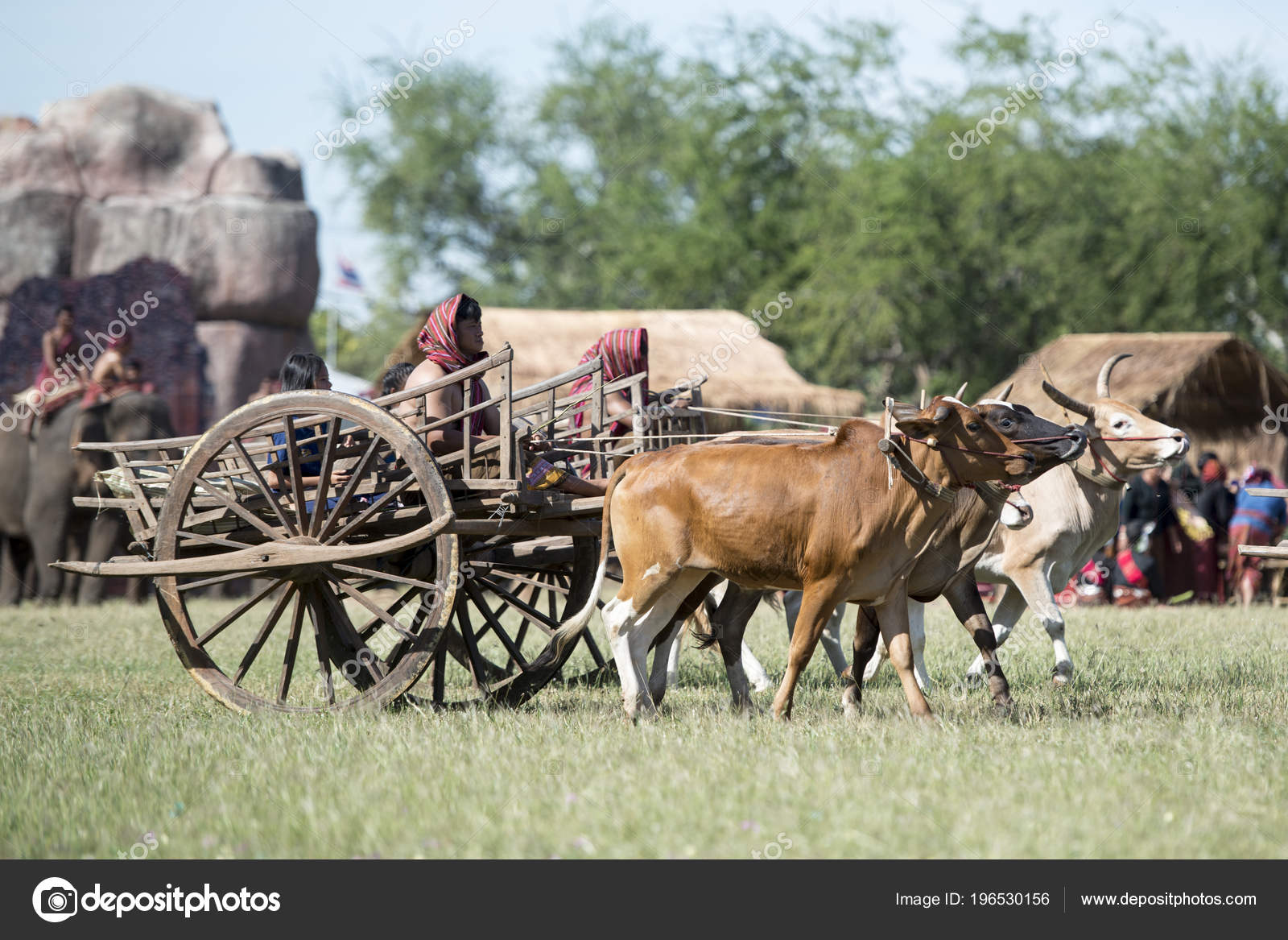Traditional Bullock Cart Elephant Show Stadium Traditional