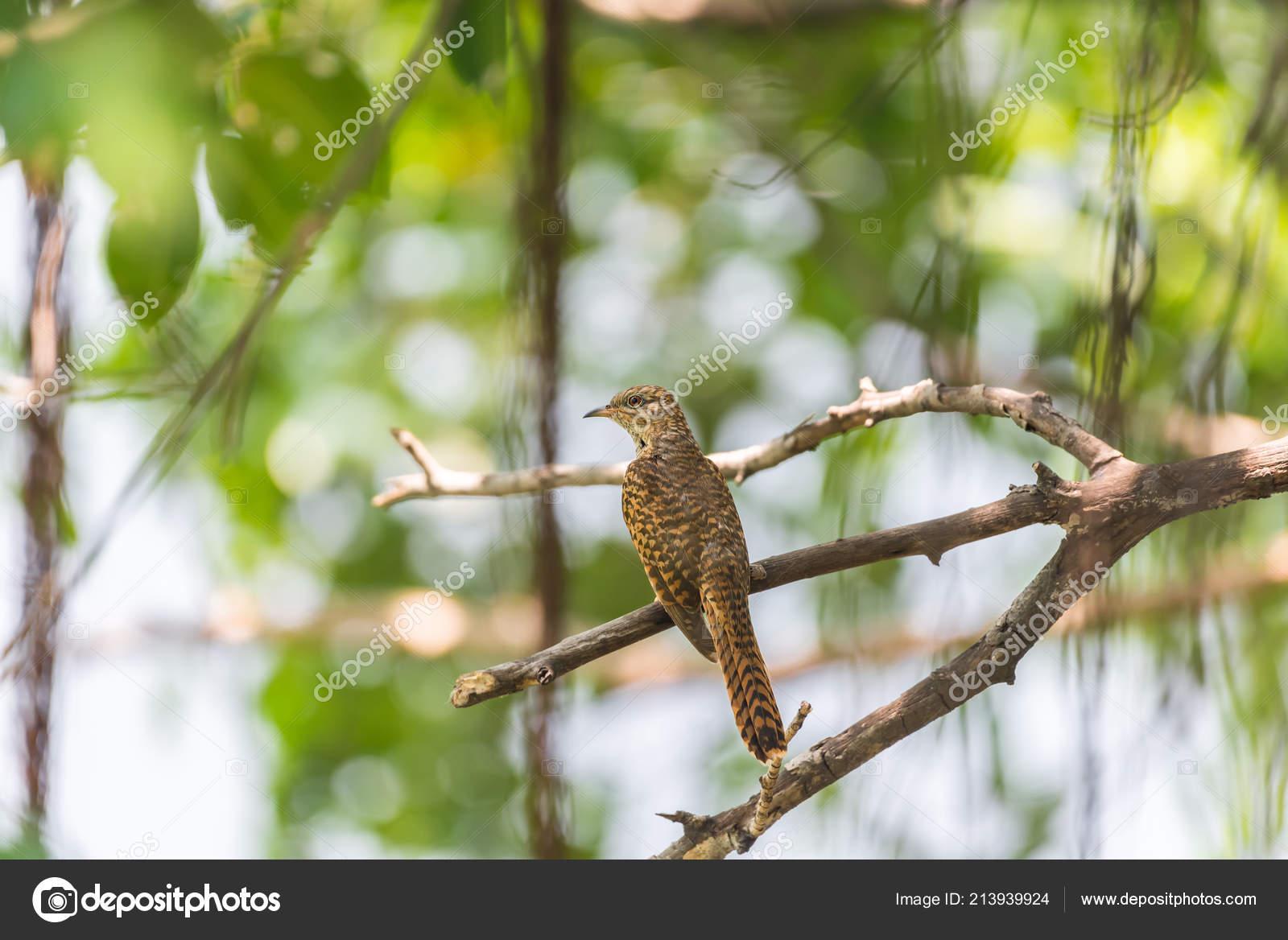 Ασιατικό με ένα μεγάλο πουλί γκαλερί εικόνα μουνί