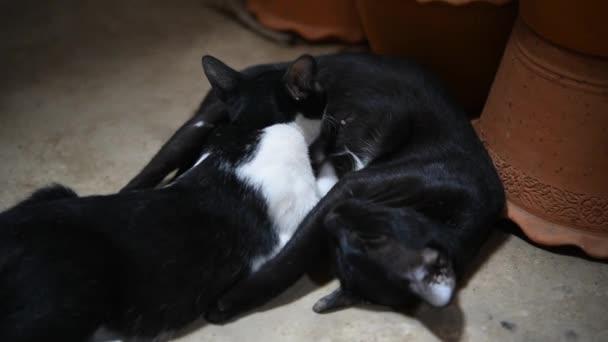 Katzenbaby ein neugeborener Versuch zu melken saugen bekommt ein Stillen von Mutter Katze mit Liebe