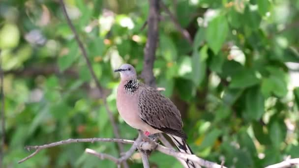 Bird (Dove, Pigeon or Disambiguation) Pigeons and doves perched on a tree in a nature wild