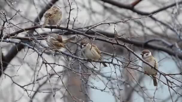 A verebek ősszel pihennek egy fán.