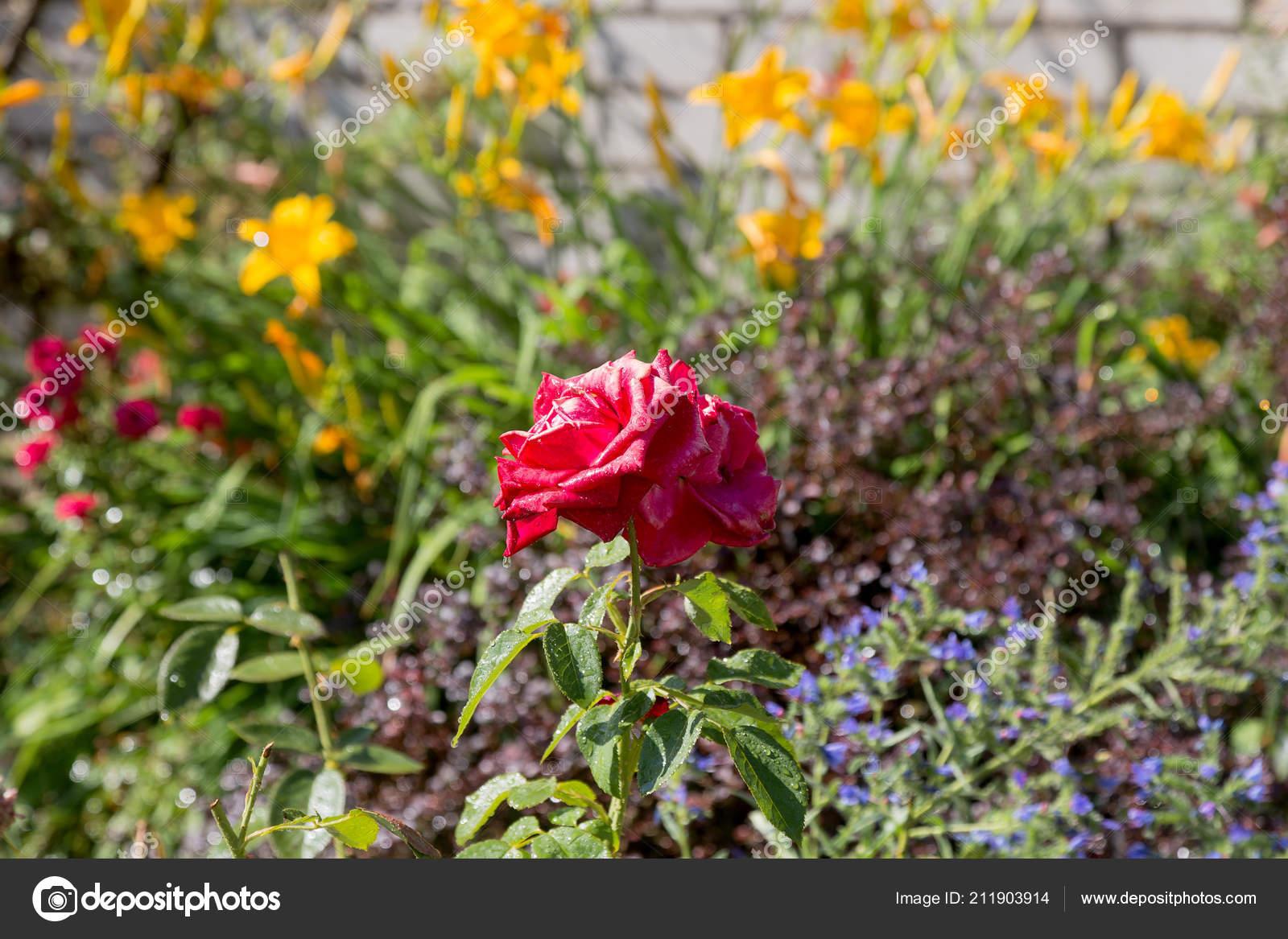 Regando Las Flores Jardín Jardinero Mujer Regando Las ...