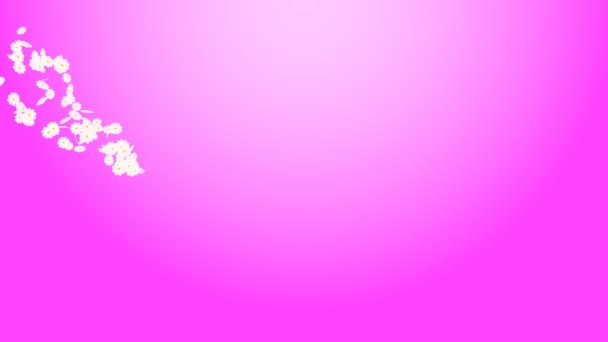 Flying daisies on a pink background, art video illustration.