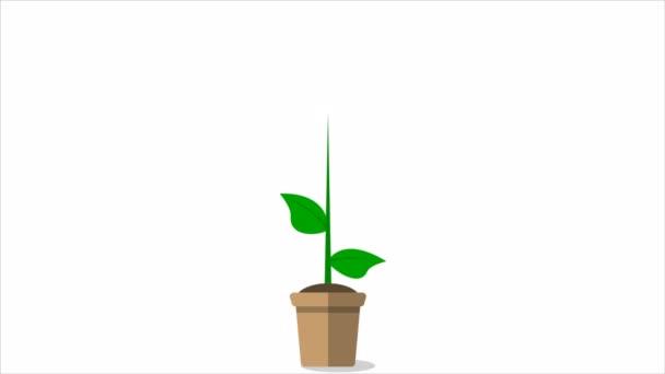 Sunflower in a pot, art video illustration.