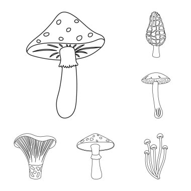 Poisonous and edible mushroom outline icons in set collection for design. Different types of mushrooms vector symbol stock web illustration.