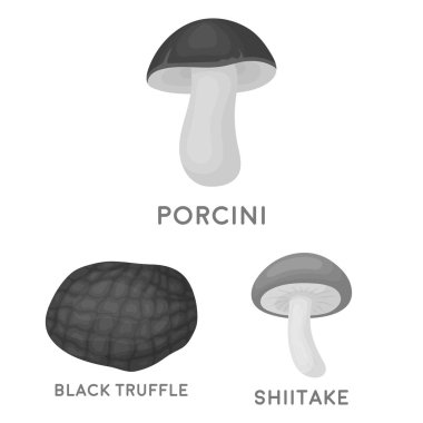 Poisonous and edible mushroom monochrome icons in set collection for design. Different types of mushrooms vector symbol stock  illustration.