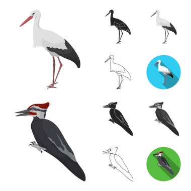 Types of birds cartoon,black,flat,monochrome,outline icons in set collection for design. Home and wild bird vector symbol stock web illustration.