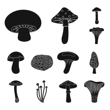 Poisonous and edible mushroom black icons in set collection for design. Different types of mushrooms vector symbol stock  illustration.