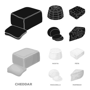 Mozzarella, feta, cheddar, ricotta.Different types of cheese set collection icons in black,monochrome style vector symbol stock illustration web.