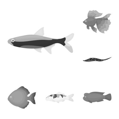 Different types of fish monochrome icons in set collection for design. Marine and aquarium fish vector symbol stock web illustration.