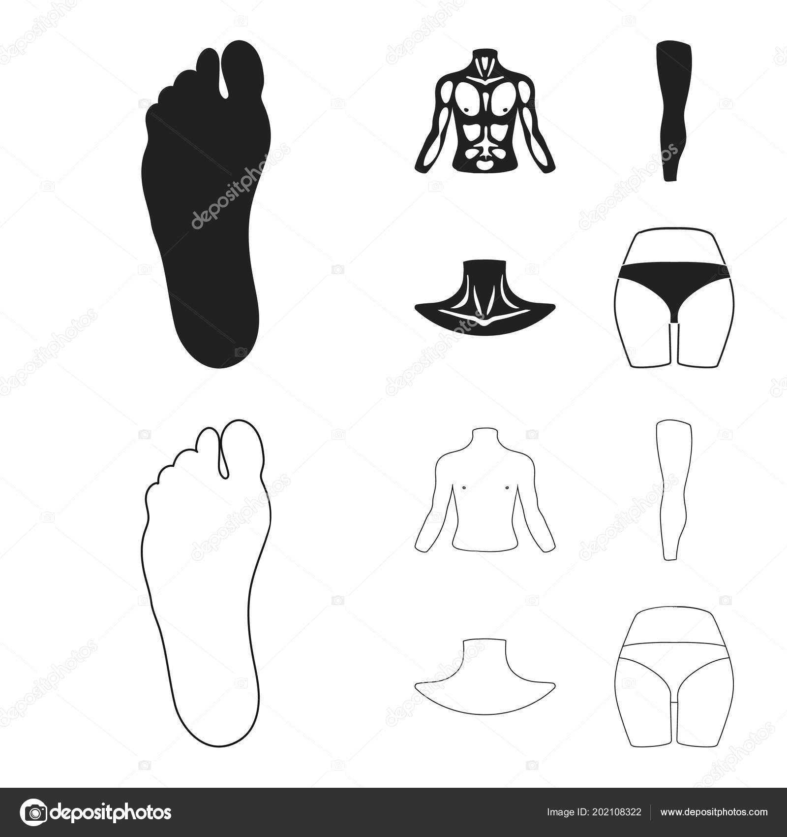 Torso, pierna, cuello y glúteos. Partes del cuerpo sistema los ...