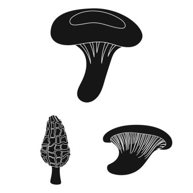 Poisonous and edible mushroom black icons in set collection for design. Different types of mushrooms vector symbol stock web illustration.