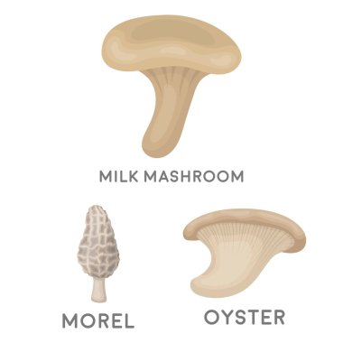 Poisonous and edible mushroom cartoon icons in set collection for design. Different types of mushrooms vector symbol stock  illustration.