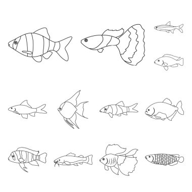 Different types of fish outline icons in set collection for design. Marine and aquarium fish vector symbol stock web illustration.
