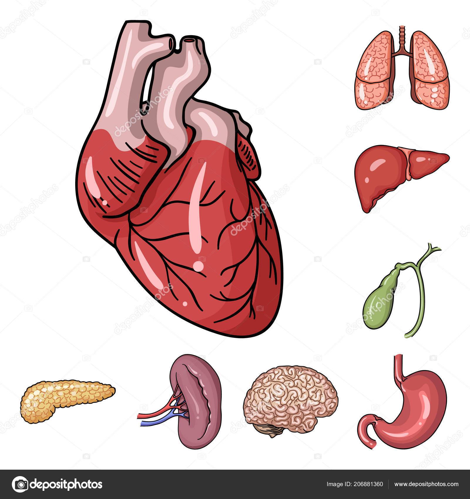 Órganos humanos dibujos animados iconos de colección set de diseño ...