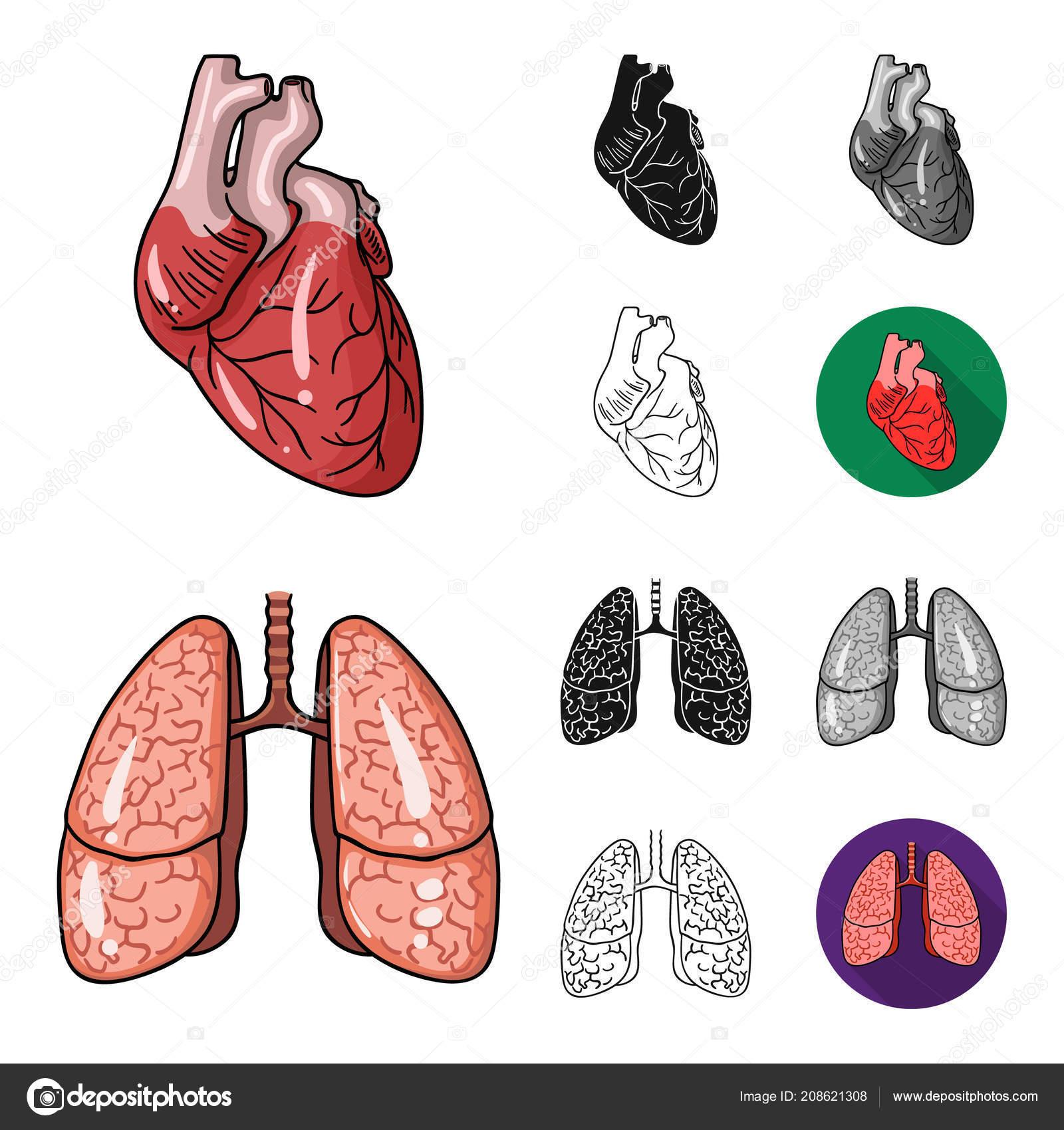 Human Organs Cartoonblackflatmonochromeoutline Icons In Set