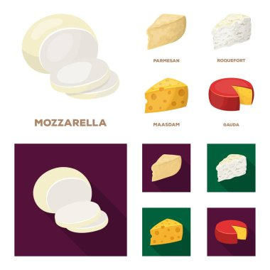 Parmesan, roquefort, maasdam, gauda.Different types of cheese set collection icons in cartoon,flat style vector symbol stock illustration web.