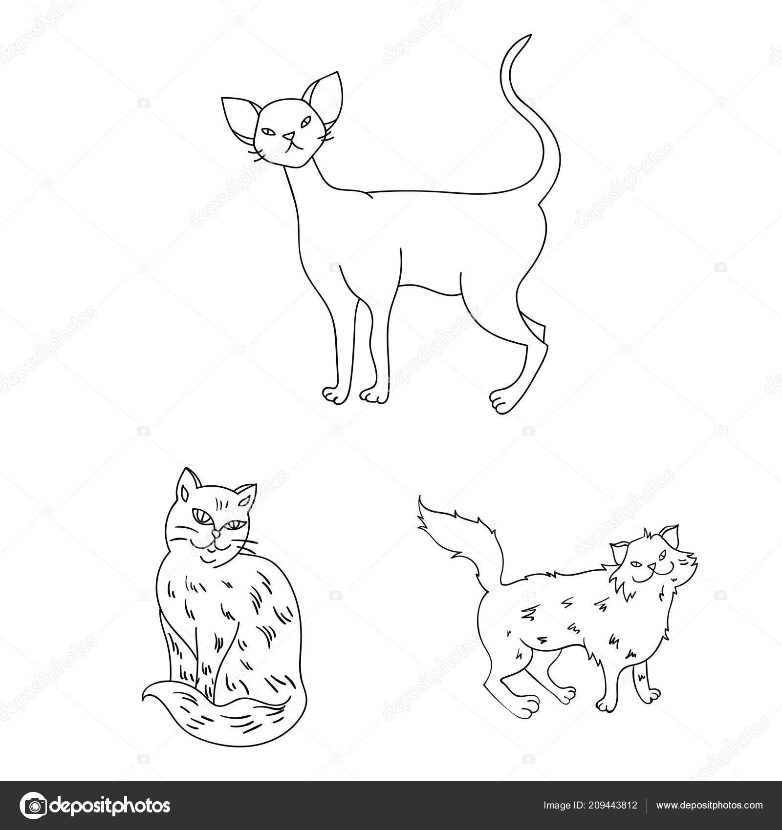 Breeds Of Cats Outline Icons In Set Collection For Design Pet Cat