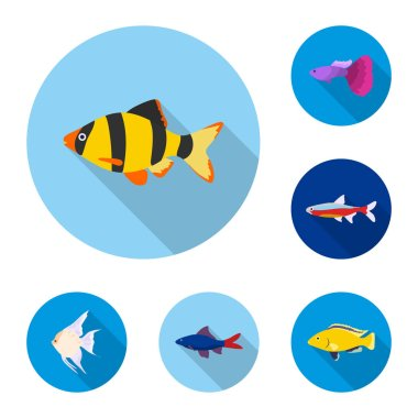 Different types of fish flat icons in set collection for design. Marine and aquarium fish vector symbol stock web illustration.