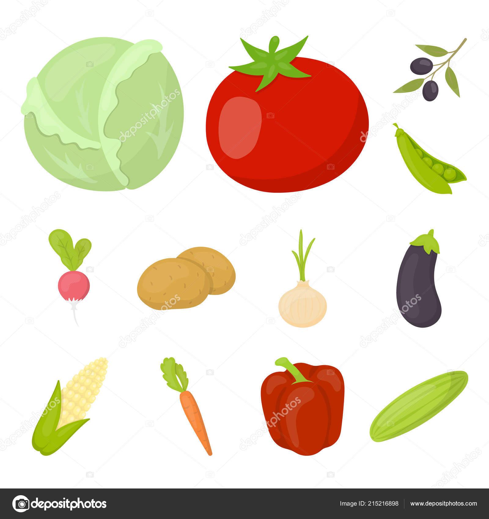 tipos de verduras con sus nombres