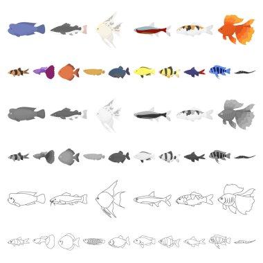 Different types of fish cartoon icons in set collection for design. Marine and aquarium fish vector symbol stock illustration.