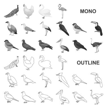 Types of birds monochrom icons in set collection for design. Home and wild bird vector symbol stock web illustration.