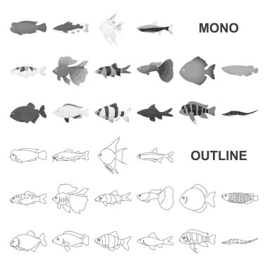 Different types of fish monochrom icons in set collection for design. Marine and aquarium fish vector symbol stock web illustration.
