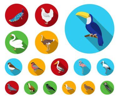Types of birds flat icons in set collection for design. Home and wild bird vector symbol stock web illustration.