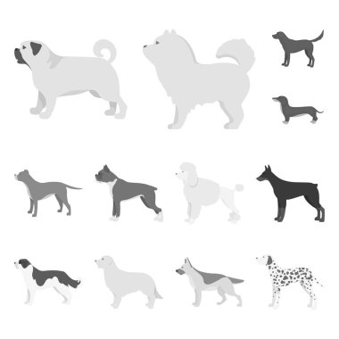 Vector design of cute and puppy sign. Collection of cute and animal stock vector illustration.