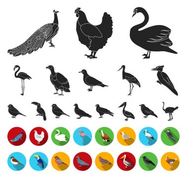 Types of birds black,flat icons in set collection for design. Home and wild bird vector symbol stock web illustration.