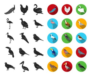 Types of birds black,flat icons in set collection for design. Home and wild bird vector symbol stock  illustration.