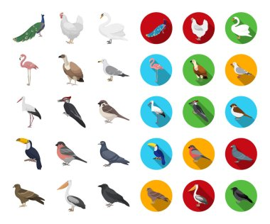 Types of birds cartoon,flat icons in set collection for design. Home and wild bird vector symbol stock  illustration.
