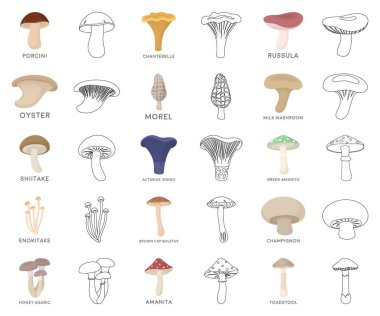 Poisonous and edible mushroom cartoon,outline icons in set collection for design. Different types of mushrooms vector symbol stock web illustration.