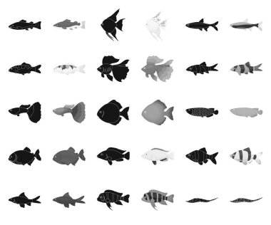 Different types of fish black,monochrome icons in set collection for design. Marine and aquarium fish vector symbol stock web illustration.
